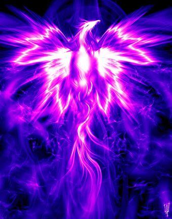 vfhealingcenter violet phoenix